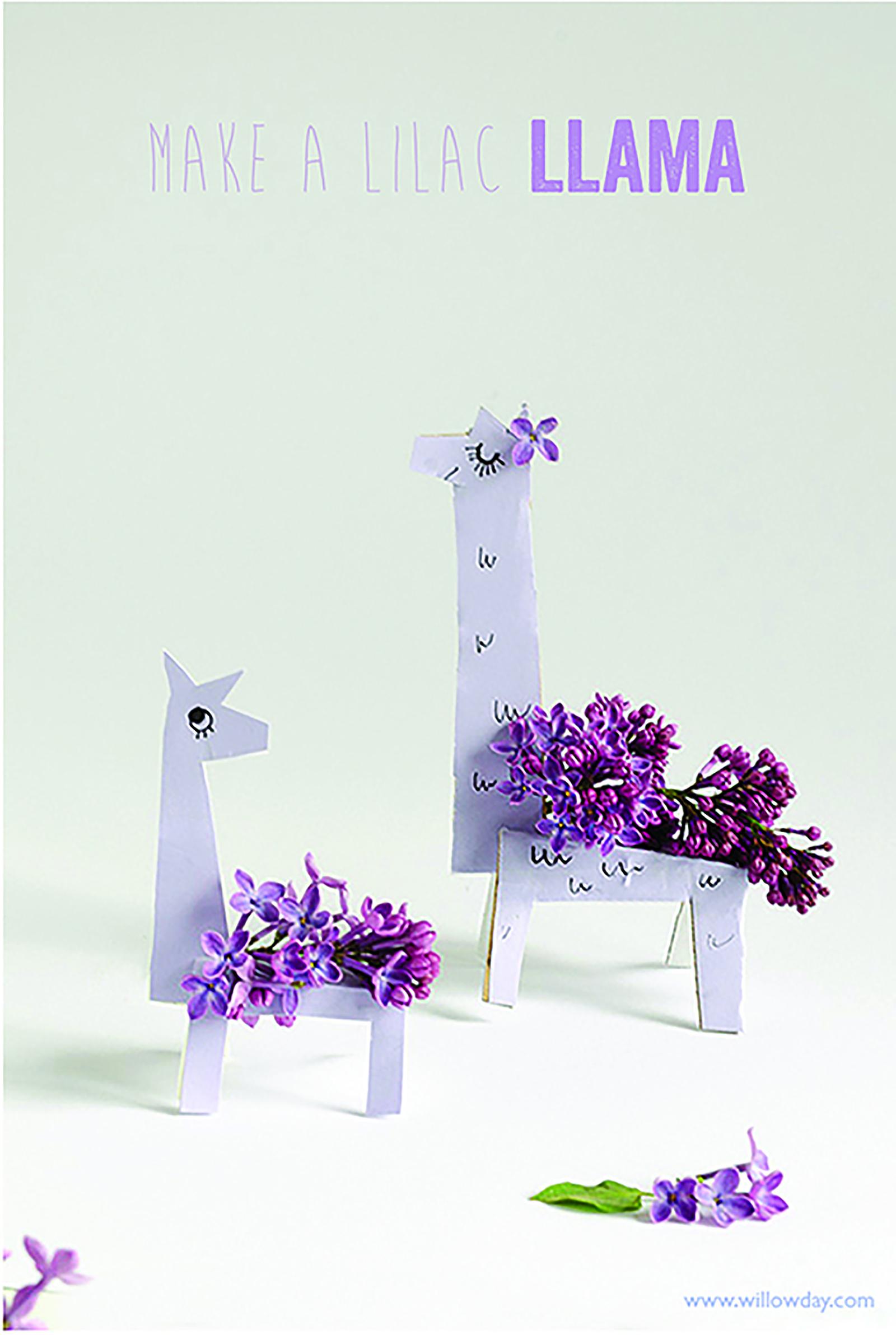 1600 LilacsLlama_MAINSTART